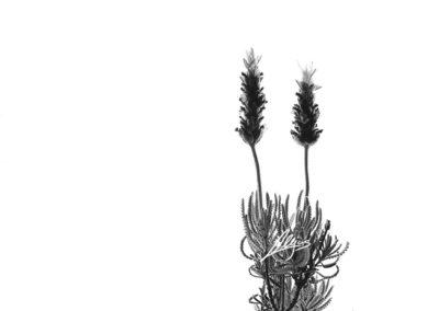 alejos-fotografia -abstracto-15